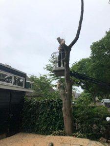 Bomen zagen Alex Verhuur en Dienstverlening Uffelte